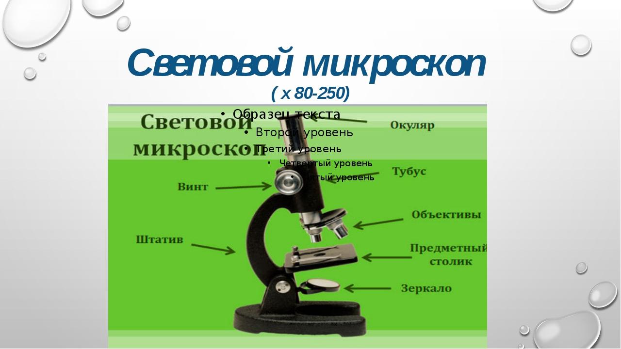 Световой микроскоп ( х 80-250)