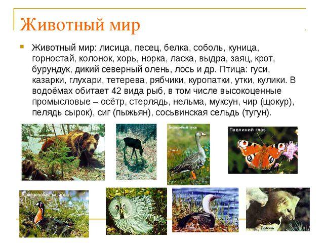Животный мир Животный мир: лисица, песец, белка, соболь, куница, горностай, к...