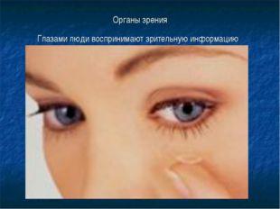 Органы зрения Глазами люди воспринимают зрительную информацию