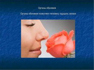 Органы обоняния Органы обоняния позволяют человеку ощущать запахи