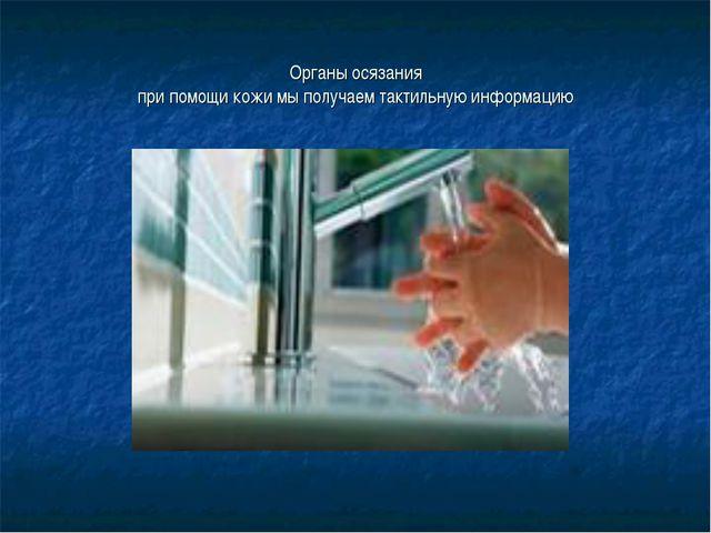 Органы осязания при помощи кожи мы получаем тактильную информацию