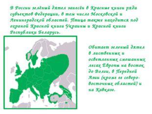 Обитает зеленый дятел в лиственных и осветленных смешанных лесах Европы на во