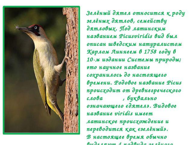 Зелёный дятел относится к роду зелёных дятлов, семейству дятловых. Под латинс...