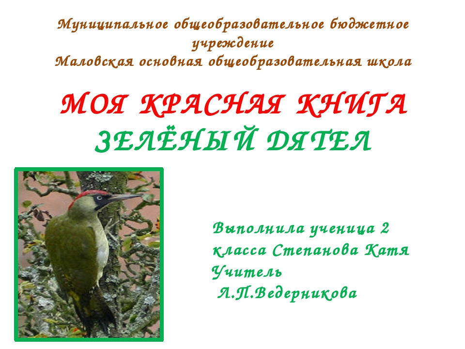 Среднего размера дятел. Длина 33—36см, размах крыльев 40—44см, вес 150—250...