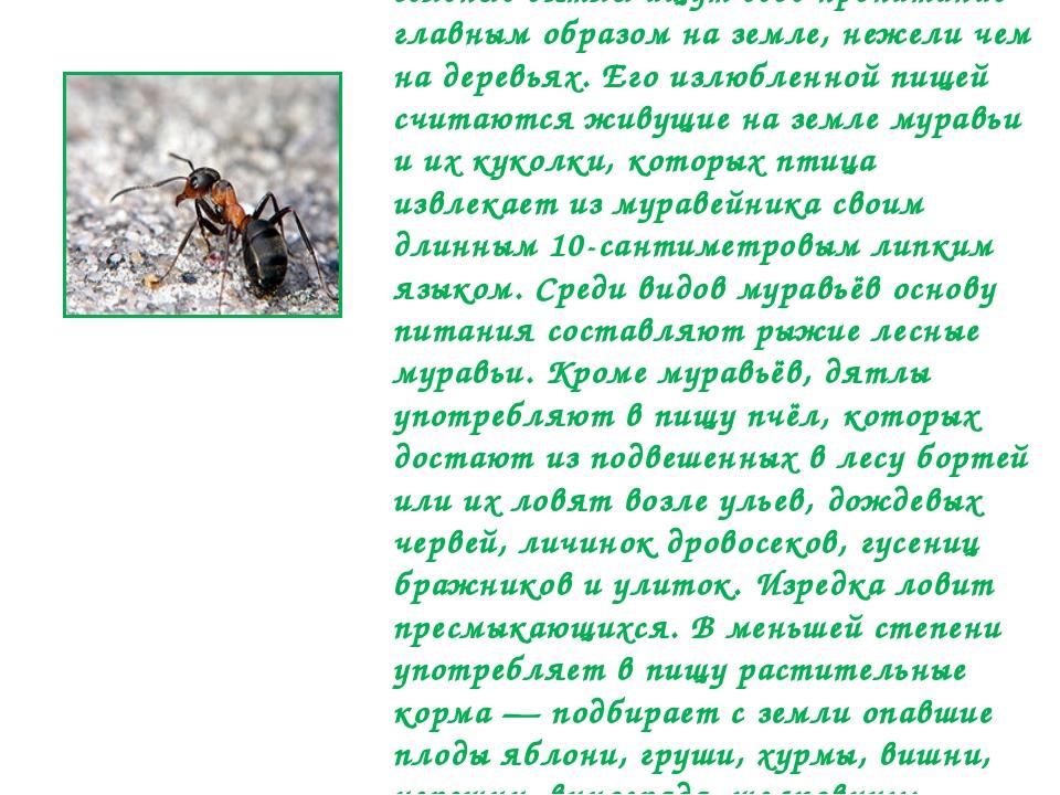 В зимнее время, когда земля покрывается снегом, а муравьи прячутся под землю,...