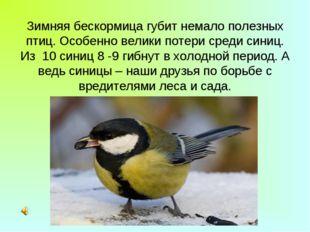 Зимняя бескормица губит немало полезных птиц. Особенно велики потери среди си