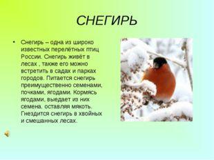 СНЕГИРЬ Снегирь – одна из широко известных перелётных птиц России. Снегирь жи
