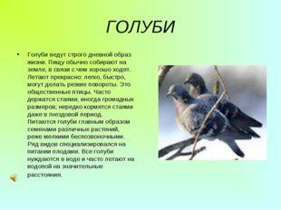 ГОЛУБИ Голуби ведут строго дневной образ жизни. Пищу обычно собирают на земле