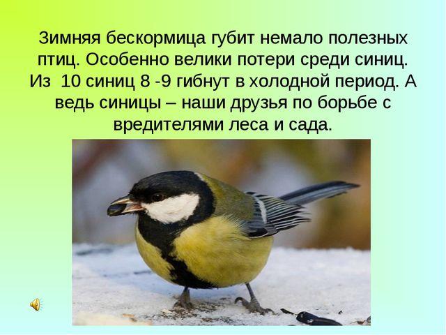 Зимняя бескормица губит немало полезных птиц. Особенно велики потери среди си...