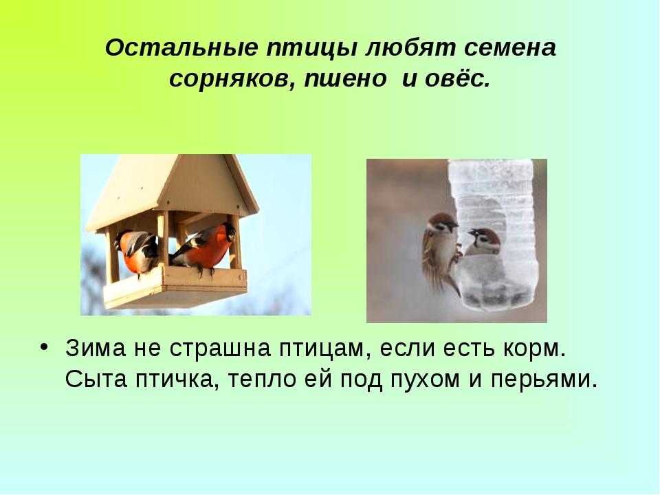 Остальные птицы любят семена сорняков, пшено и овёс. Зима не страшна птицам,...