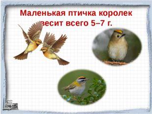 Маленькая птичка королек весит всего 5–7 г.