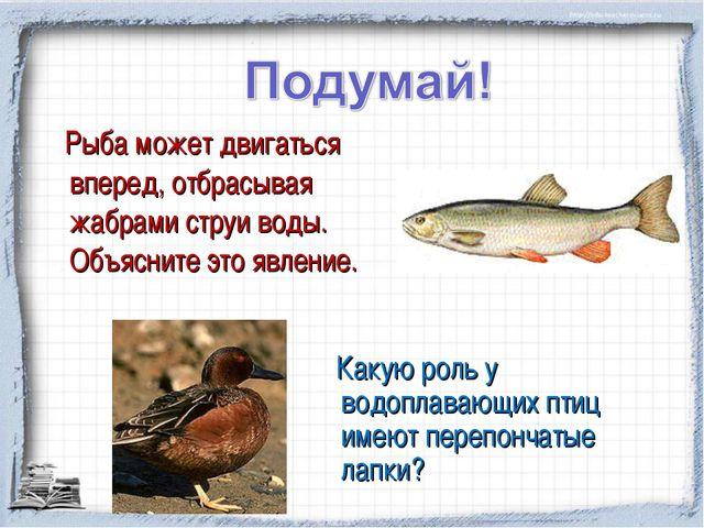 Рыба может двигаться вперед, отбрасывая жабрами струи воды. Объясните это яв...