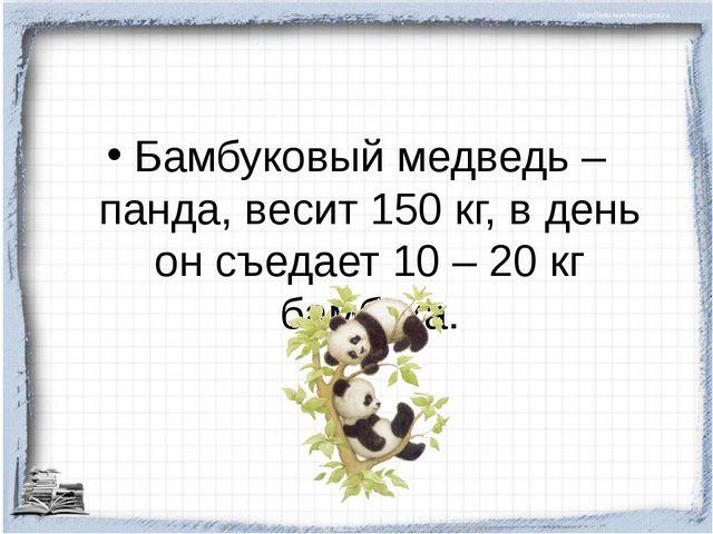 Бамбуковый медведь – панда, весит 150 кг, в день он съедает 10 – 20 кг бамбука.