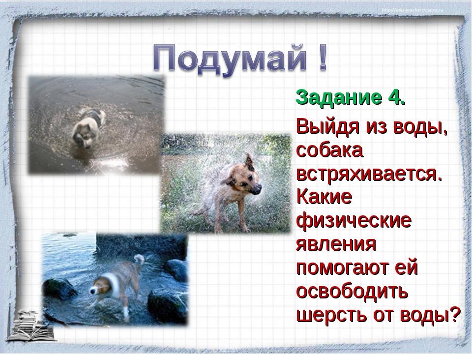 Задание 4. Выйдя из воды, собака встряхивается. Какие физические явления пом...