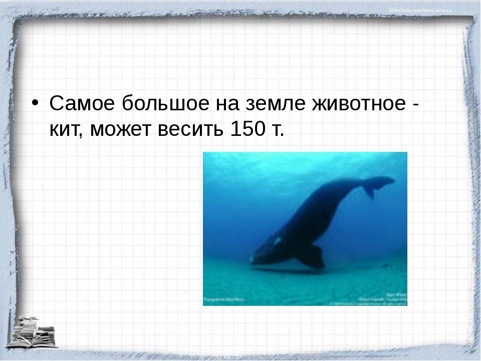 Самое большое на земле животное - кит, может весить 150 т.