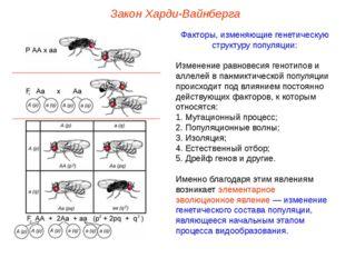 Закон Харди-Вайнберга Факторы, изменяющие генетическую структуру популяции: И