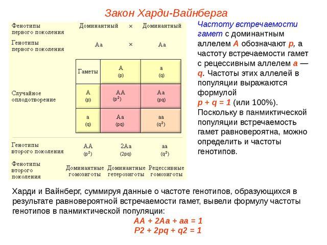 Закон Харди-Вайнберга Частоту встречаемости гамет с доминантным аллелем А обо...