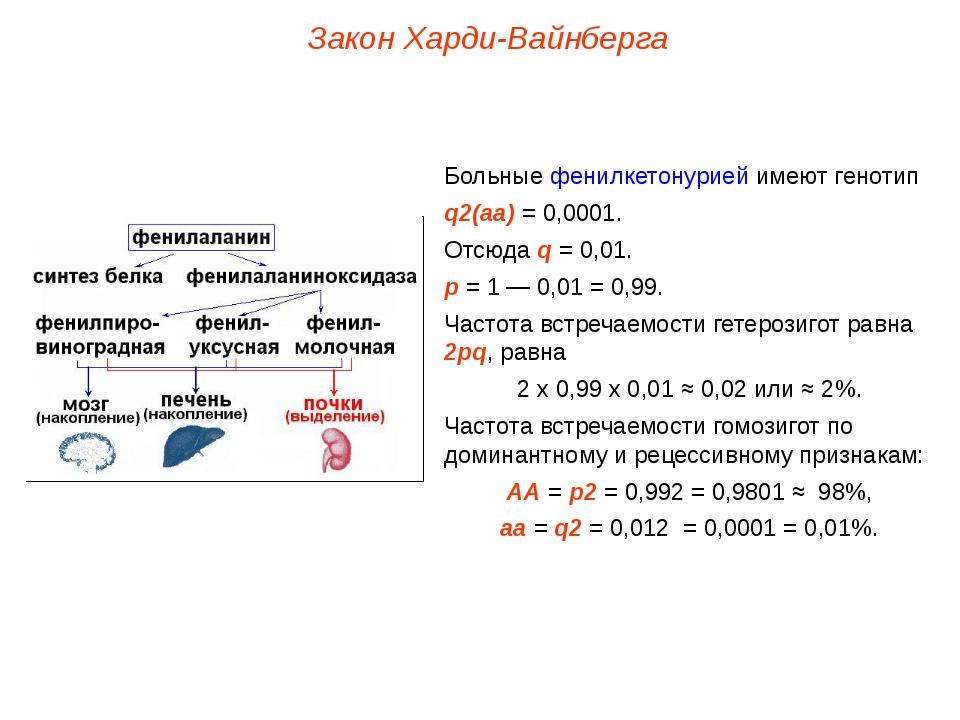 Закон Харди-Вайнберга Больные фенилкетонурией имеют генотип q2(аа) = 0,0001....