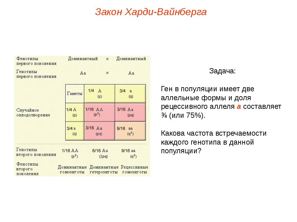 Закон Харди-Вайнберга Задача: Ген в популяции имеет две аллельные формы и дол...