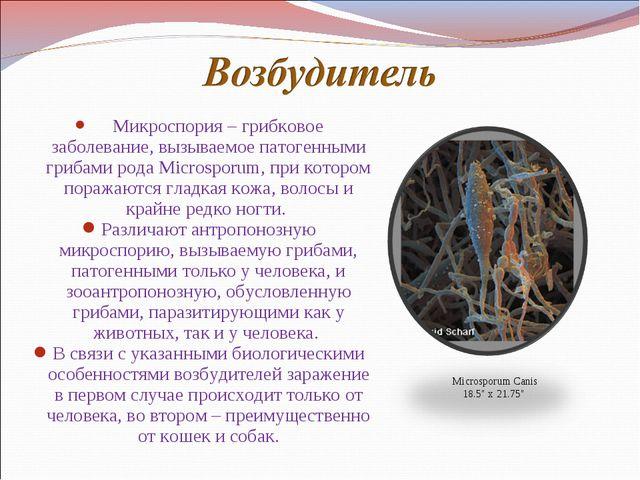 Микроспория – грибковое заболевание, вызываемое патогенными грибами рода...