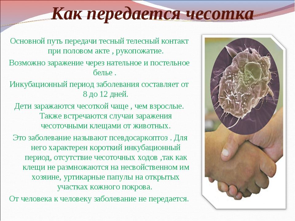 Как передается чесотка Основной путь передачи тесный телесный контакт при пол...