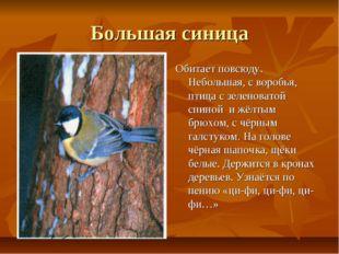 Большая синица Обитает повсюду. Небольшая, с воробья, птица с зеленоватой спи