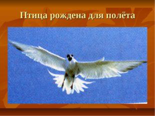 Птица рождена для полёта