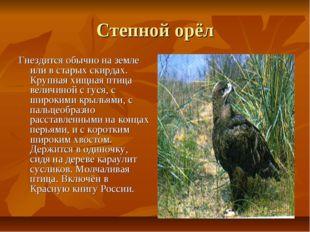Степной орёл Гнездится обычно на земле или в старых скирдах. Крупная хищная п