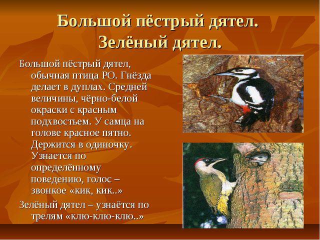Большой пёстрый дятел. Зелёный дятел. Большой пёстрый дятел, обычная птица РО...