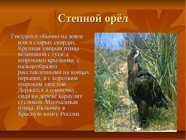 Степной орёл Гнездится обычно на земле или в старых скирдах. Крупная хищная п...