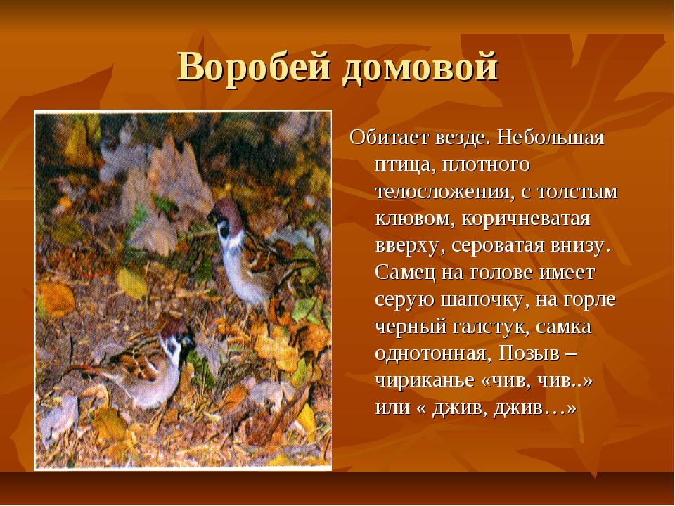 Воробей домовой Обитает везде. Небольшая птица, плотного телосложения, с толс...