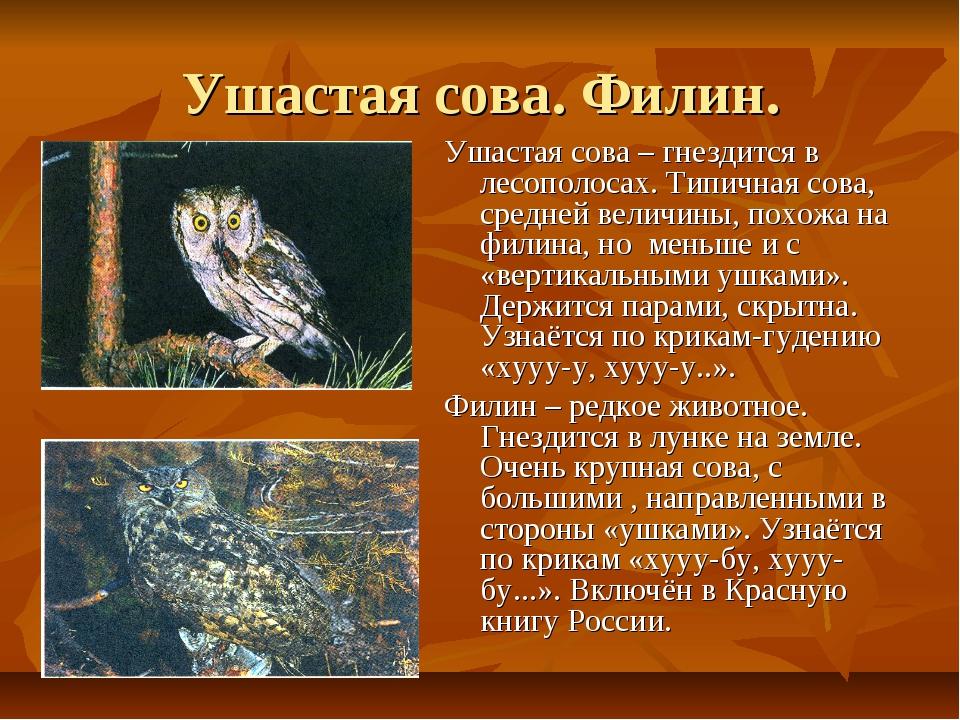 Ушастая сова. Филин. Ушастая сова – гнездится в лесополосах. Типичная сова, с...