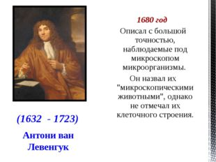 Антони ван Левенгук 1680 год Описал с большой точностью, наблюдаемые под микр