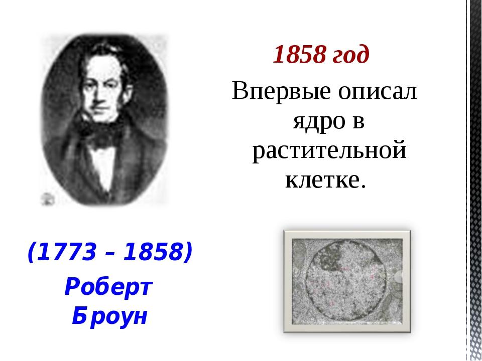 1858 год Впервые описал ядро в растительной клетке. (1773 – 1858) Роберт Броун