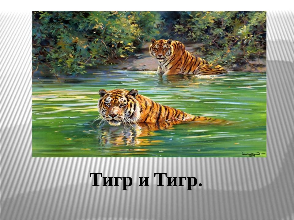 Тигр и Тигр.