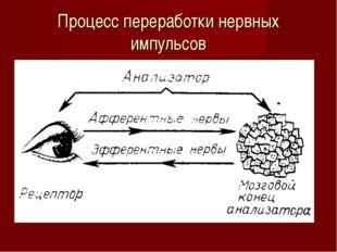 Процесс переработки нервных импульсов