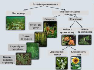 Өсімдіктер патшалығы Балдырлар Жоғары сатыдағы өсімдіктер Споралы Тұқымды Мү