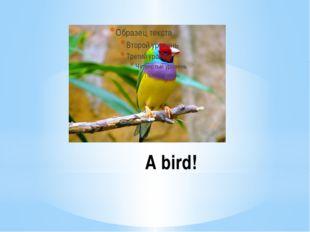 A bird!