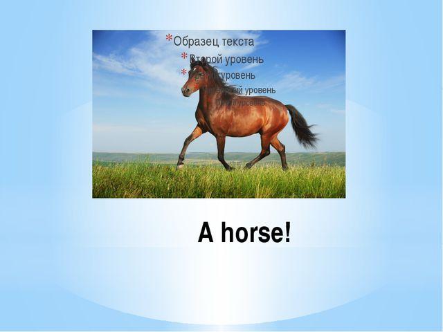 A horse!