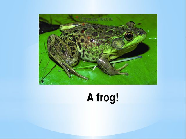 A frog!