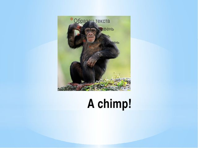 A chimp!