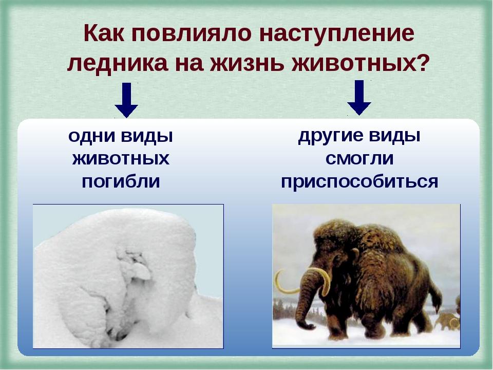Как повлияло наступление ледника на жизнь животных? одни виды животных погибл...