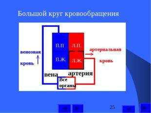 Большой круг кровообращения П.П П.Ж. Л.П. Л.Ж. Все органы артерия вена артери