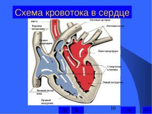Схема кровотока в сердце Левый желудочек Левое предсердие Легочные вены Легоч