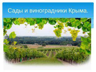 Сады и виноградники Крыма.