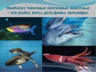 Наиболее типичные нектонные животные – это рыбы, киты, дельфины, кальмары.