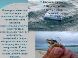 Некоторые животные связаны только с поверхностью воды. К таким животным отно