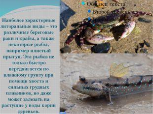 Наиболее характерные литоральные виды – это различные береговые раки и крабы