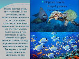 В воде обитает очень много животных. Но условия их жизни значительно отличаю