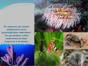 На морском дне можно обнаружить массу разнообразных животных. Это различные